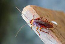 Πώς θα ξεφορτωθείτε τις κατσαρίδες