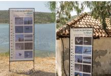 ορνιθοπανίδα της λιμνοθάλασσας του Βιβαρίου