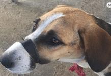 κακοποίησης σκύλου